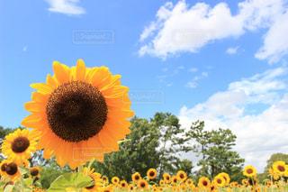 花のクローズアップの写真・画像素材[2367367]