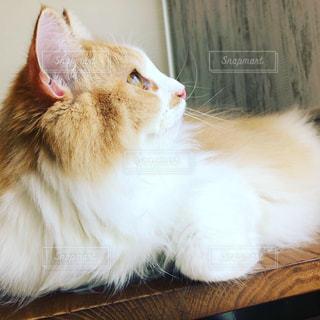 空を見上げている猫の写真・画像素材[2182124]