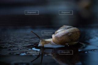 梅雨の訪れの写真・画像素材[2182160]