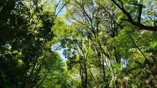 森の木の写真・画像素材[2183325]