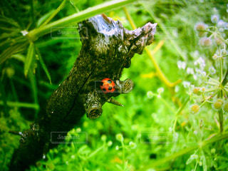てんとう虫の住処の写真・画像素材[2184395]