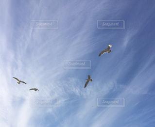 空への写真・画像素材[2243467]