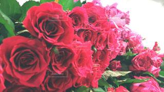 薔薇の花束の写真・画像素材[2185176]