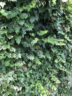 森の中の緑の植物2の写真・画像素材[2188320]