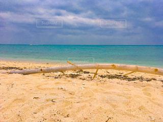 浜辺の流木の写真・画像素材[2189680]