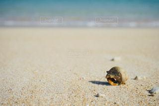 ビーチのクローズアップの写真・画像素材[2189746]