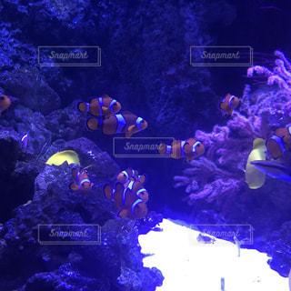 サンゴ礁と魚の写真・画像素材[2186338]