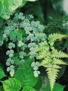 緑の植物のクローズアップの写真・画像素材[2185510]