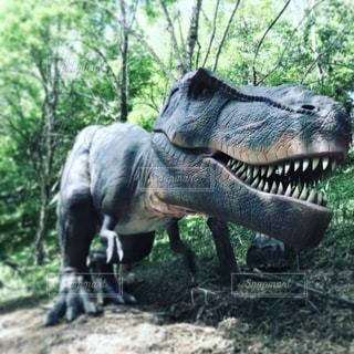 恐竜のクローズアップの写真・画像素材[2185416]