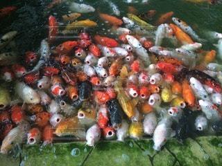 魚の写真・画像素材[14349]