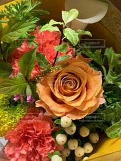 花のクローズアップの写真・画像素材[2187947]