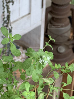 植物のクローズアップの写真・画像素材[2280841]