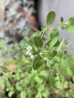 花のクローズアップの写真・画像素材[2280845]