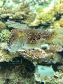 美ら海水族館の魚の写真・画像素材[2199666]