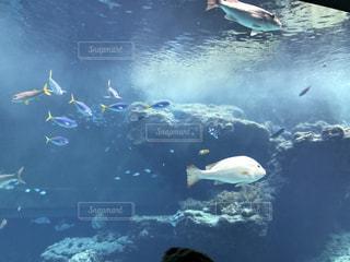美ら海水族館の魚たちBの写真・画像素材[2199667]