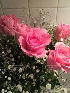 花の写真・画像素材[84723]