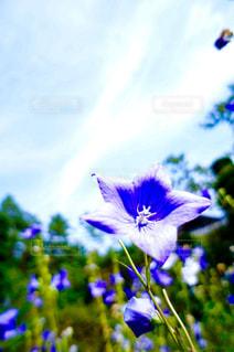 花のクローズアップの写真・画像素材[2190259]