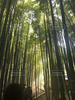 森の木の写真・画像素材[2190389]