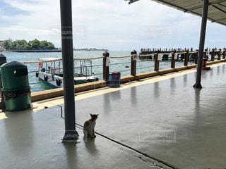 港のデッキと猫の写真・画像素材[2190430]