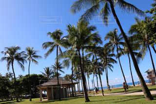 ハワイホノルルのビーチの写真・画像素材[2243575]