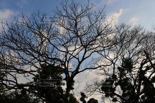風景の写真・画像素材[85168]