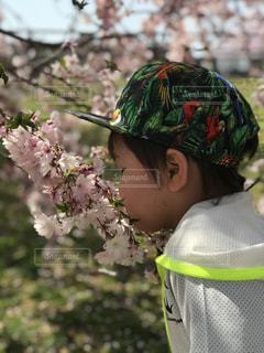 桜の匂いはどんな匂い?の写真・画像素材[2194588]