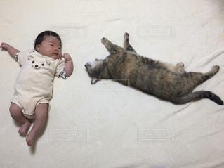 赤ちゃんとねこの写真・画像素材[2432839]