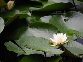 緑の植物のクローズアップの写真・画像素材[2264378]