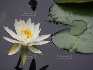 池のクローズアップの写真・画像素材[2264379]