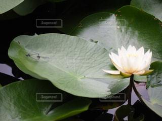 緑の植物のクローズアップの写真・画像素材[2264380]