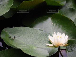 植物のクローズアップの写真・画像素材[2264381]