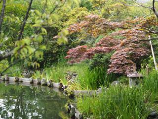 木々に囲まれた水域の写真・画像素材[2264402]
