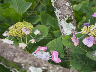 花園のクローズアップの写真・画像素材[2264404]