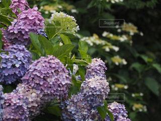 花のクローズアップの写真・画像素材[2264405]