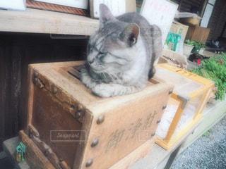 おみくじの見張り猫の写真・画像素材[2264477]