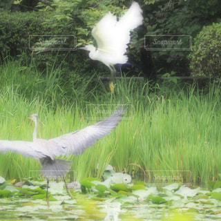 水域の上を飛ぶ鳥の写真・画像素材[2264478]