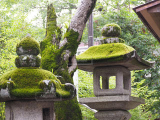 神社の写真・画像素材[2264481]