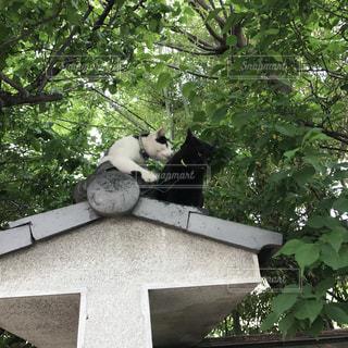屋根の上に猫たちの写真・画像素材[2264643]
