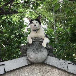 木の上に座っている猫の写真・画像素材[2264646]