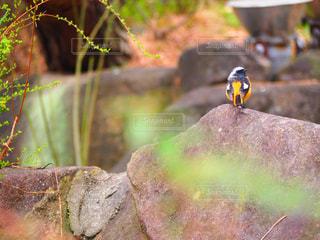 岩の上に座っている小さな鳥の写真・画像素材[2264651]