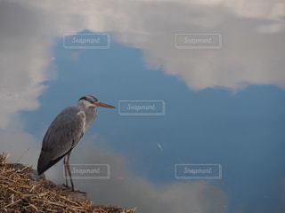 水域の隣に立っている鳥の写真・画像素材[2264652]