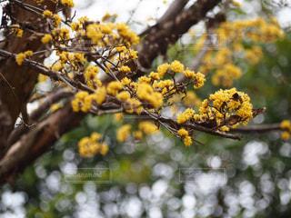 黄色い花の写真・画像素材[2264744]