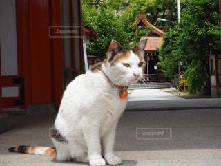 門の前に座っている猫の写真・画像素材[2264747]