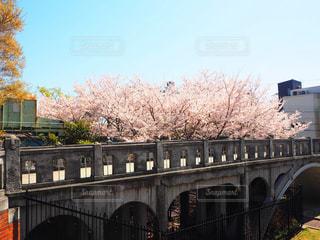 桜と歴史ある橋の写真・画像素材[2264748]