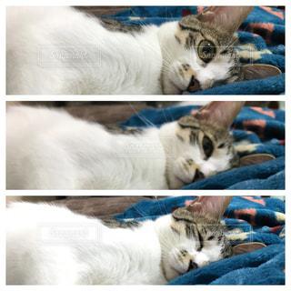 ベッドに横たわる猫の写真・画像素材[2264773]