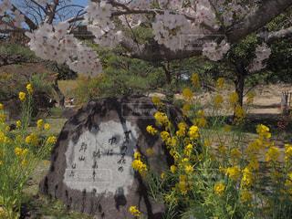 野原の黄色い花の写真・画像素材[2266718]