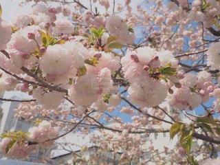 花のクローズアップの写真・画像素材[2266719]