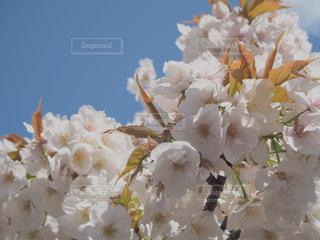 花のクローズアップの写真・画像素材[2266720]