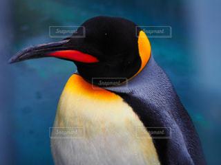 ペンギンの写真・画像素材[2269382]