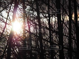光の写真・画像素材[2269391]